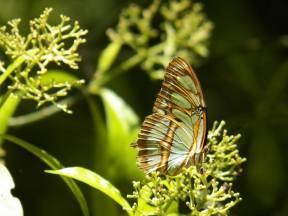 greenbutterfly